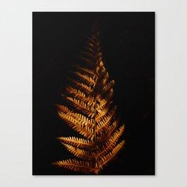 Minimalist Brown Autumn Fern Leaf Black Background Foliage Photography Canvas Print