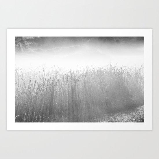 Field Grass in the Mist   Art Print