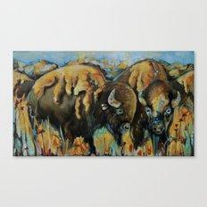 Spring Buffalo Canvas Print