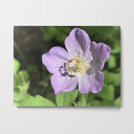 Wild Geranium in Purple Metal Print