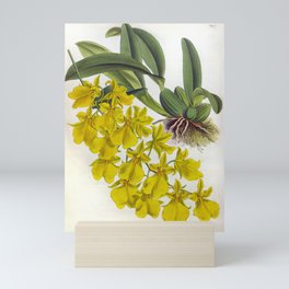 Little Yellow Vintage Orchids Lindenia Collection Mini Art Print
