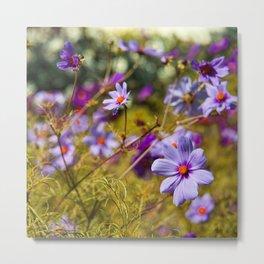 Flowering Cosmos Metal Print
