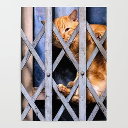 Sleepy street cat Poster