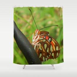 Gulf Fritillary 3 Shower Curtain