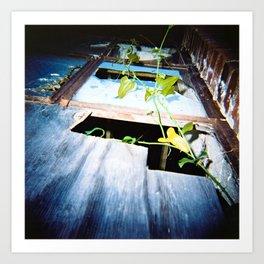 Broken Window/Vine Art Print