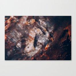 petrified III Canvas Print