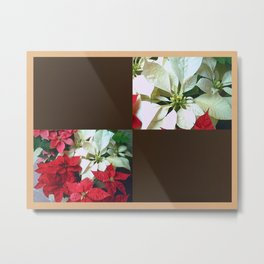 Mixed color Poinsettias 1 Blank Q3F0 Metal Print