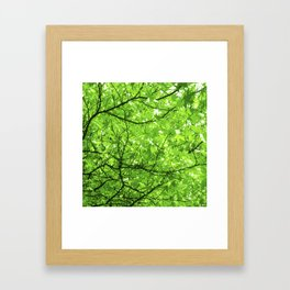 green spring tree II Framed Art Print