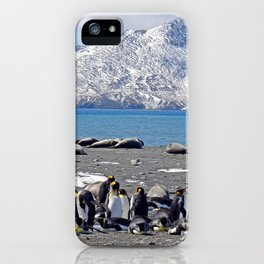 King Penguins and Fur Seals iPhone Case