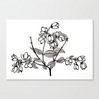jasmine Canvas Prints featuring Jasmine by Dianadia