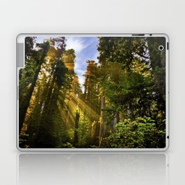Redwood Forest Sunrise Laptop & iPad Skin