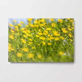 Buttercups in motion Metal Print