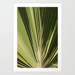 Abstract Palm Frond Art Print