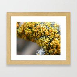 Golden Lichen Framed Art Print