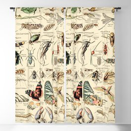 Vintage Insect Identification Chart // Arthropodes by Adolphe Millot XL 19th Century Science Artwork Blackout Curtain