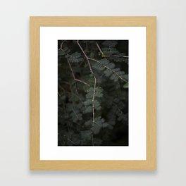 Plant - Fern 3 Framed Art Print