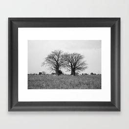 Two baobab trees Framed Art Print