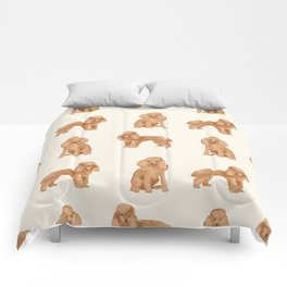 Toy Poodle apricot coat dog breed pet portrait dog breeds poodles Comforters