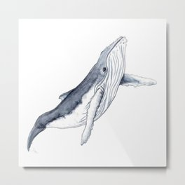 Baby humpback whale for children kid baby Metal Print