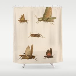 Vintage Grasshopper Diagram (1875) Shower Curtain