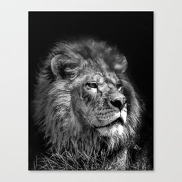 Proud Young Lion Canvas Print