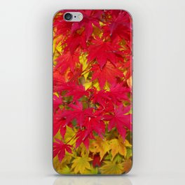 Scarlet and gold autumn maple leaves iPhone Skin