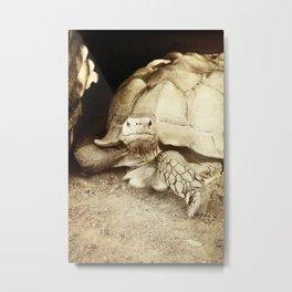 The Confrontational Desert Tortoise Metal Print