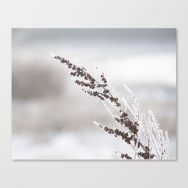 snowy grass Canvas Print