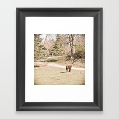 How Now! Framed Art Print
