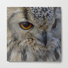 Eurasian eagle-owl, wild bird Metal Print