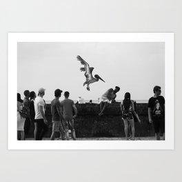 Leon, the pelican Art Print