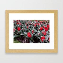 Keukenhof Red 3 Framed Art Print