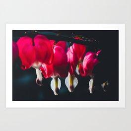 Pink Bleeding Heart Art Print