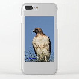 Red-Tailed Hawk on Watch at Foothill and B Street Clear iPhone Case