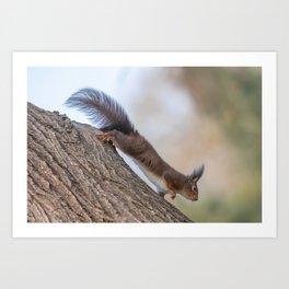 Red squirrel on tree trunk, Forest squirrel (Sciurus vulgaris) Art Print