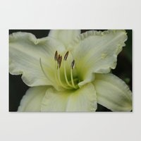 lily Canvas Prints featuring Lily by IowaShots