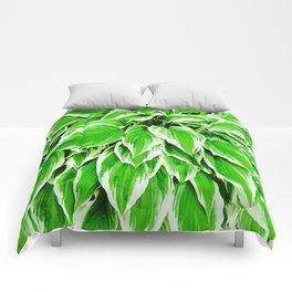 1 Hosta Comforters