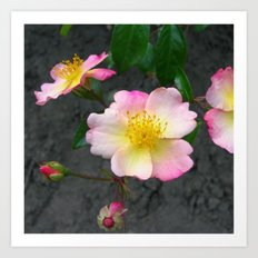wild rose IV Art Print
