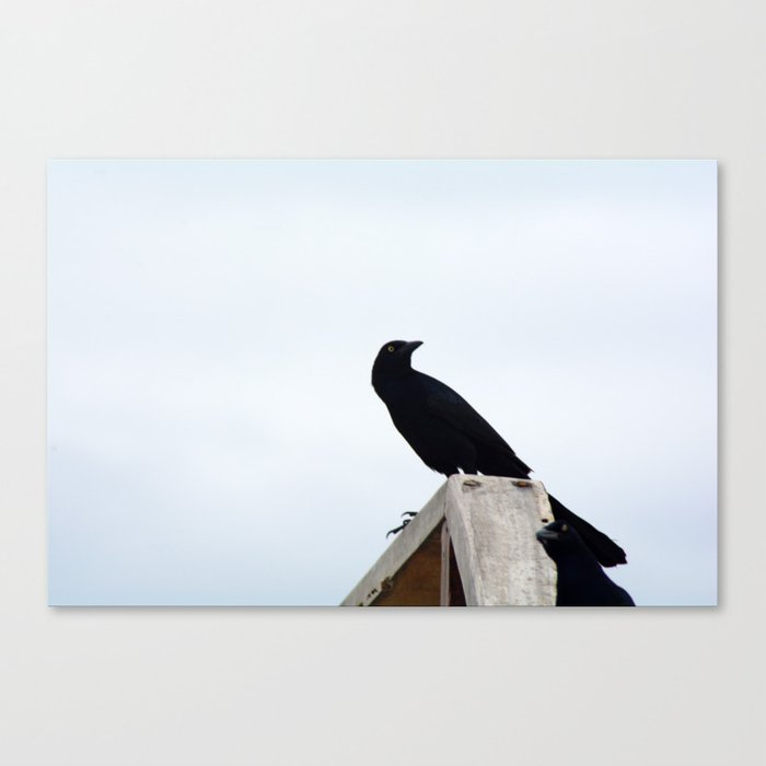 Bird collection _03 Canvas Print
