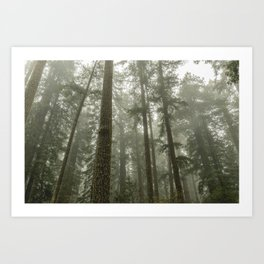 Memories of the Future - nature photography Art Print