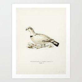 Hybrid between Western capercaillie and Willow ptarmigan (Tetrao urogallus x lagopus lagopus) illust Art Print