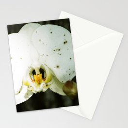 White Orchid with Spots in Mid City  Stationery Cards