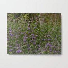 Purple Sage Bushes Metal Print