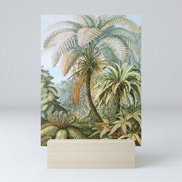 Vintage Fern and Palm Tree Art - Haeckel, 1904 Mini Art Print