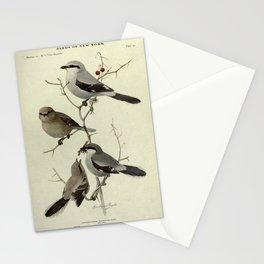 Northern Shrike, Migrant Shrike14 Stationery Cards