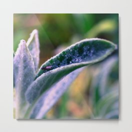 fly on Stachys leaf Photography - Nature - Garden - Plant  Metal Print