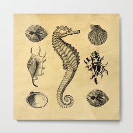 Vintage Seashells Metal Print