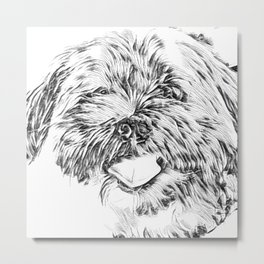 Gnocchi the Shorkie Black and White Art Metal Print