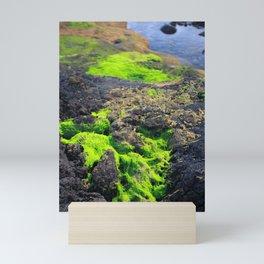 Seaweed Mini Art Print
