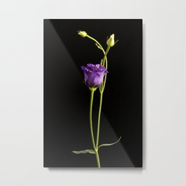 Lonely Lisianthus Metal Print